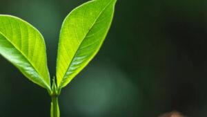 """Capgemini lanza """"Sustainable IT"""" una nueva oferta para reducir la huella de carbono de las TI"""