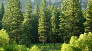 Capgemini se compromete a plantar 20 millones de árboles para 2030 en apoyo a su compromiso con un planeta sostenible